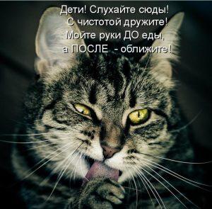 Обалденные котики c надписями: вторая часть!