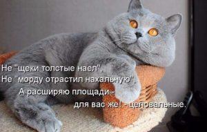 Read more about the article Полные котики, после после новогодних мероприятий!