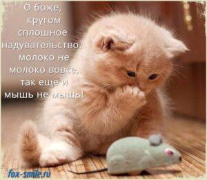 Новая подборка смешных мемов с кошками!