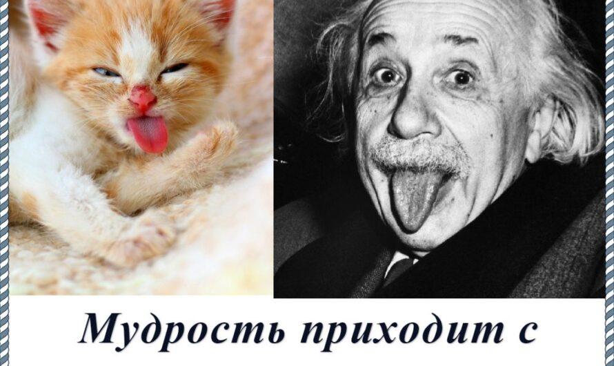 Смешные мемы с животными 05.05.2020!