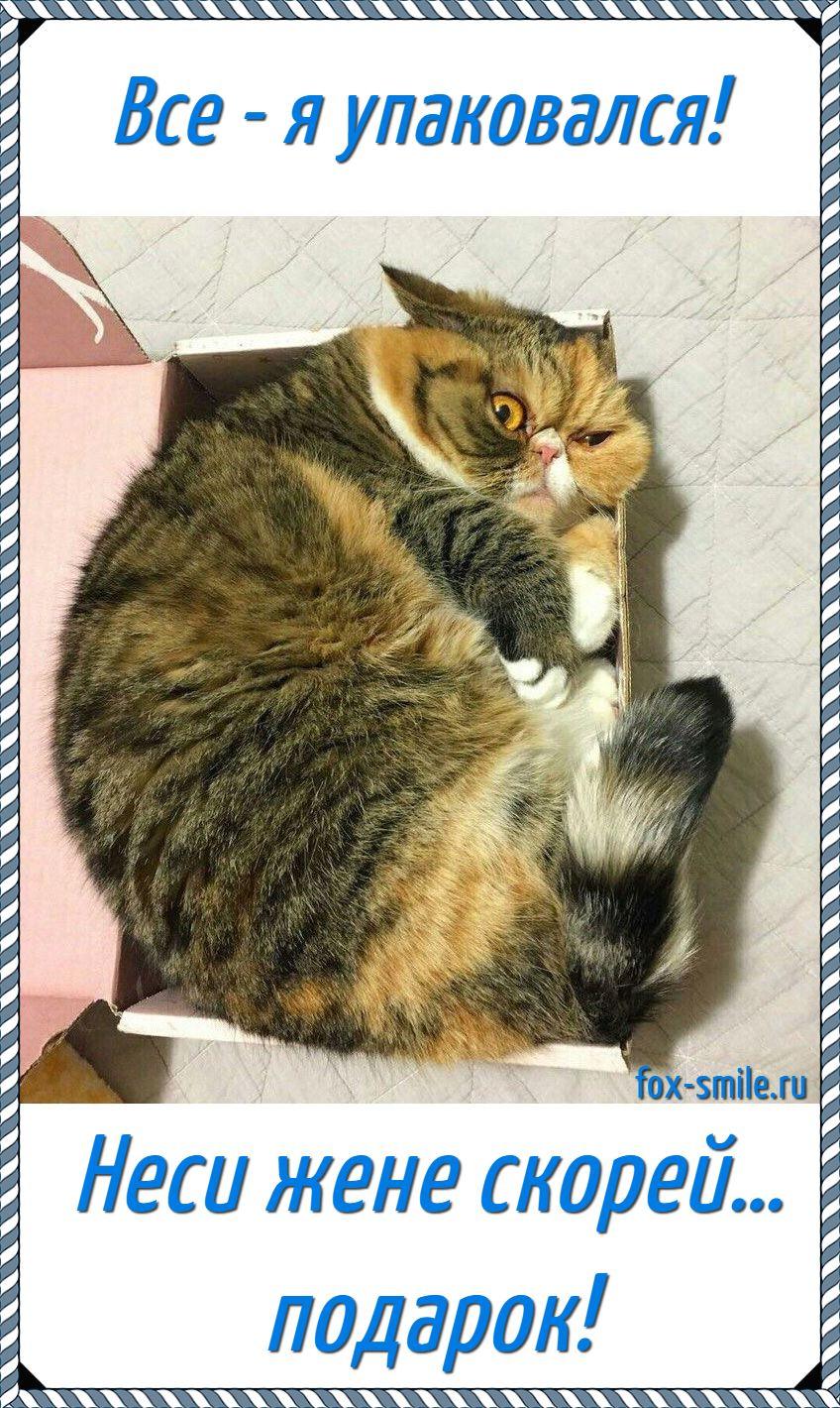 Кот в коробке, мем