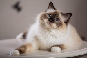 Read more about the article Подборка самых красивых и необычных кошек в фотографиях!