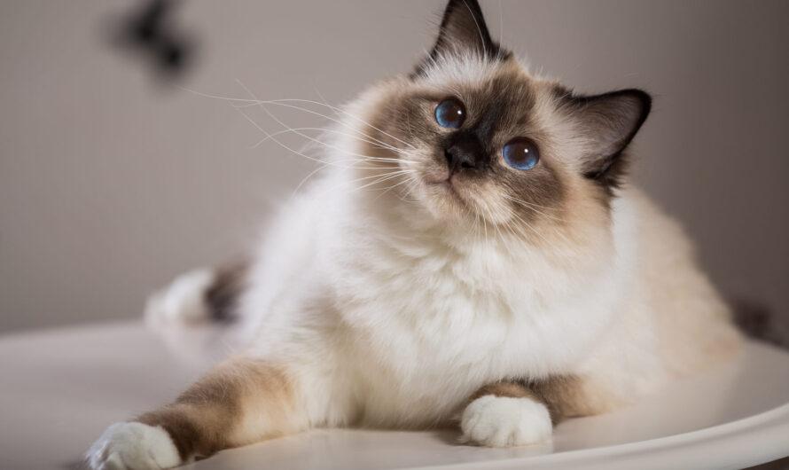 Подборка самых красивых и необычных кошек в фотографиях!
