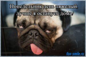 Read more about the article Прикольные животные в мемах 05.2020!