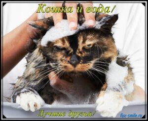Read more about the article Кошки и вода – лучшие друзья!