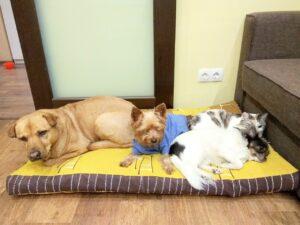 Read more about the article Кошки против собак, битва за лежак!