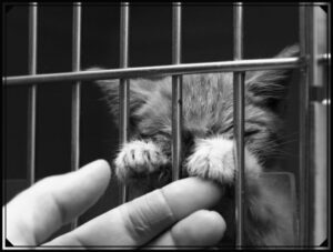 Read more about the article Дневник крошки-котенка. Первые дни в новом доме.