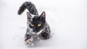 Почему кошки любят снег