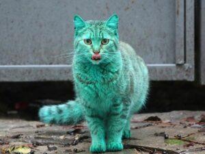 Удивительный кот бирюзового цвета, которому не повезло