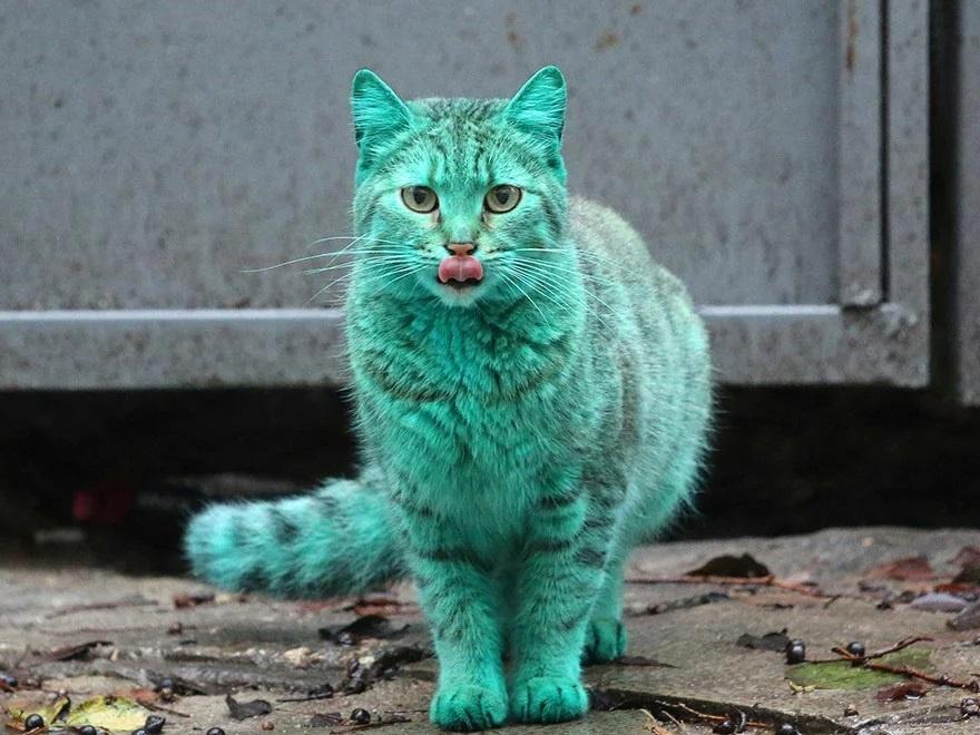 Бирюзовый кот